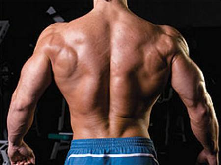 Steroids Make Muscle More Bodybuilding