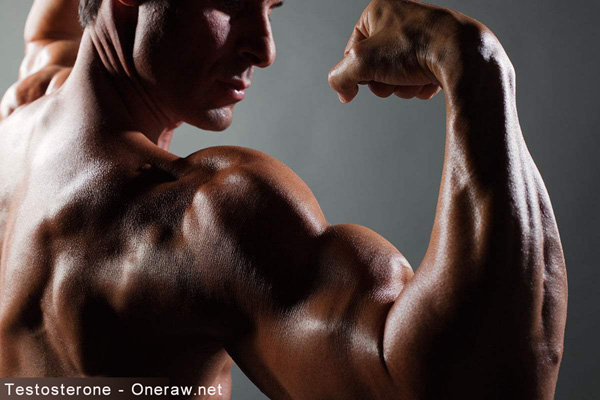 Everything about Testosterone
